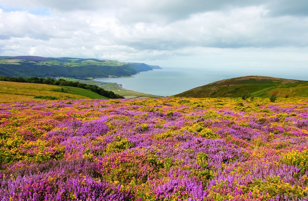 Exmoor and the Sea