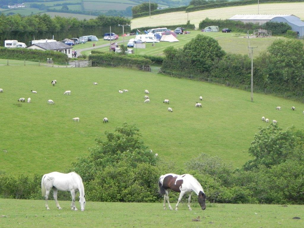 Halse Farm Camping and Caravanning Site